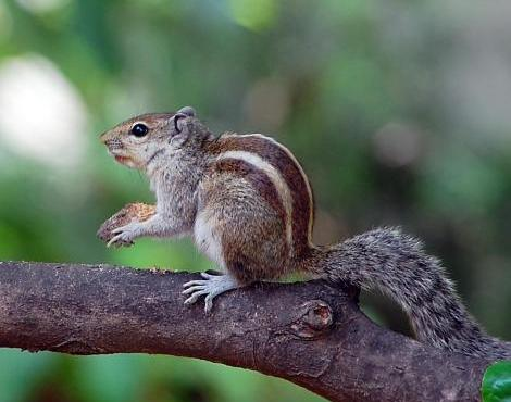 this is a squirrel fou...
