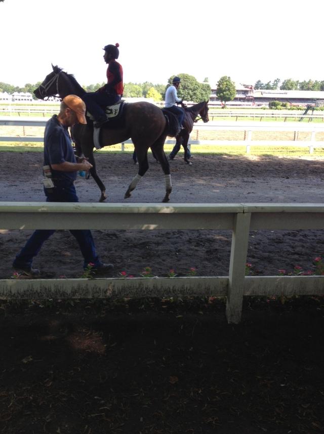 photo (1) horse