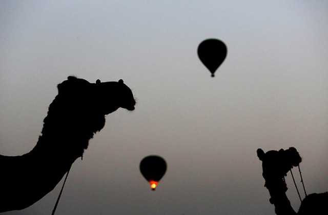 Camels and hot air balloons are silhouetted against the darkening sky