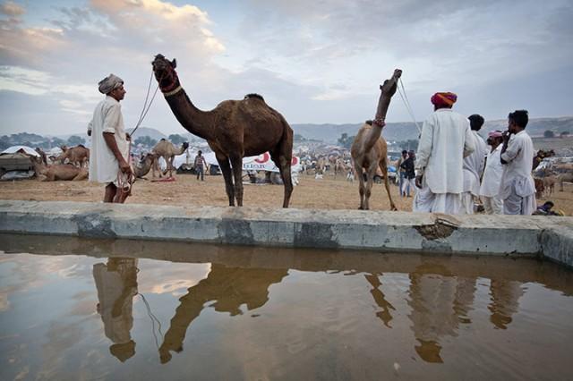 Pushkar-Camel-Fair-Rajast-007