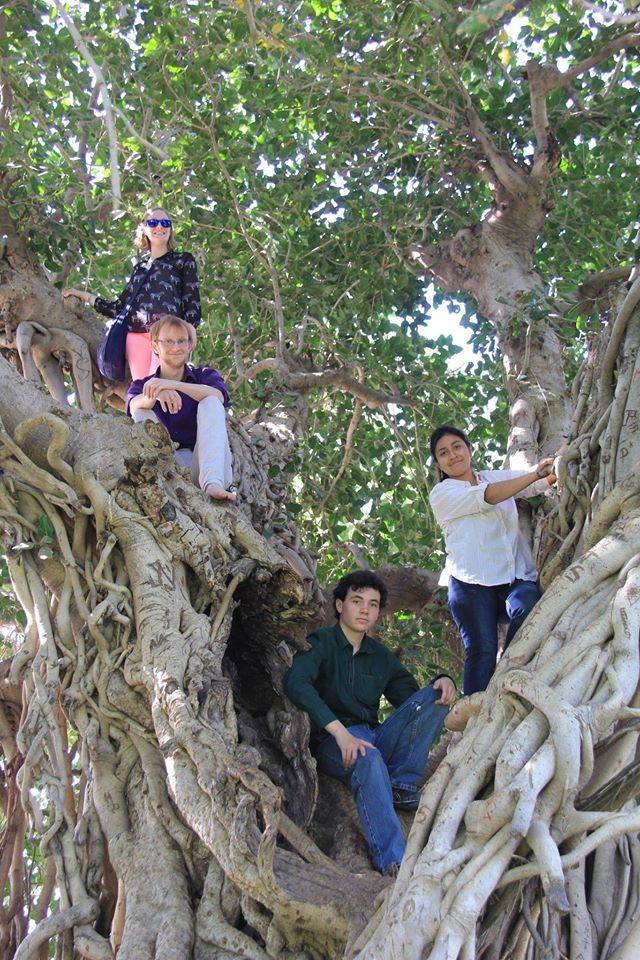 The students' first Banyan Tree at Adalaj Vav and they couldn't resist climbing !