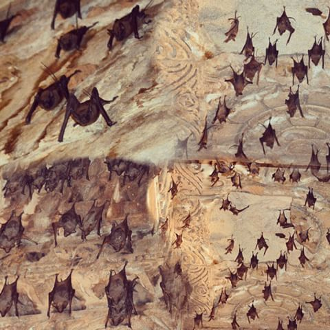 Image result for images of bats in the dome of Modhera Sun temple
