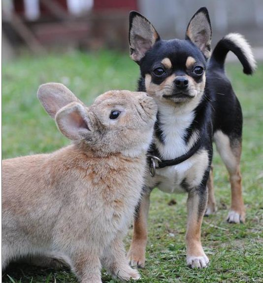 Image result for image of bunny and dog hopping
